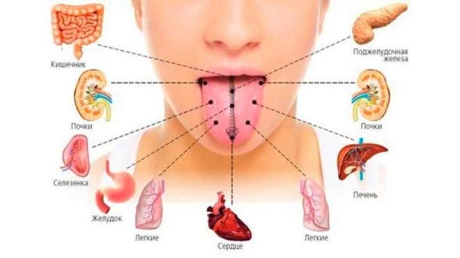 Связь желтого налета с внутренними органами