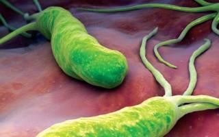 Бактерии в увеличении