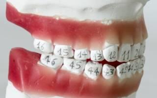 Челюсть с номерами на зубах