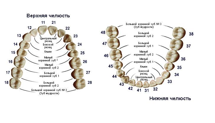 Схема расположения зубов