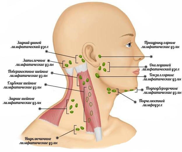 Схема лимфоузлов